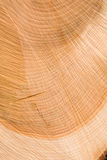 Cedar texture Stock Photography