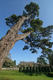 Cedar Tree. In the grounds of Dartington Hall stock image
