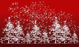 Cedar Tree Background Photo stock