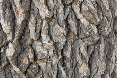 Cedar Tree Bark Background Foto de archivo libre de regalías