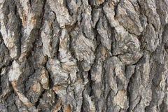 Cedar Tree Bark Background Lizenzfreies Stockfoto