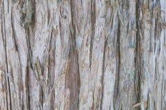 Cedar Tree Bark Background Stock Foto's