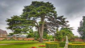 Cedar Tree e obelisco di pietra fotografia stock