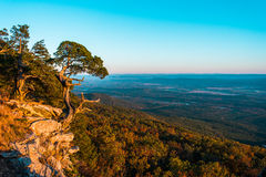 The Cedar Tree 2. Old Cedar tree on the edge of a cliff in Mt. Magazine state park Arkansas stock images