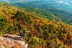 The cedar tree Stock Photography