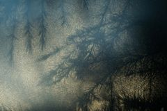 Silhouette of needles and branches of a Cedar Cedrus tree, seen through opal glass stock photography