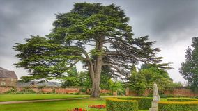 Cedar Tree and Stone Obelisk. 250 year old cedar tree of Lebanon stock photo