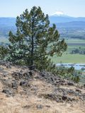 Cedar Tree y Mt McLoughlin en Oregon meridional fotos de archivo