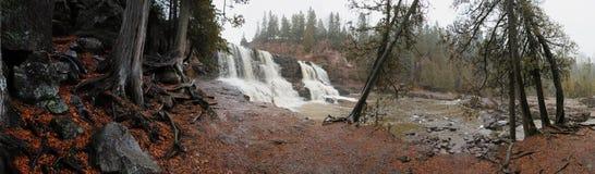Cedar Trees Falls Immagine Stock