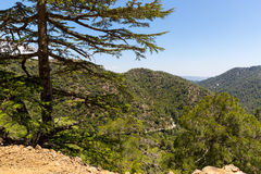 Cedar valley in Cyprus mountains Stock Photography