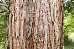 Cedar wood bark royalty free stock photos