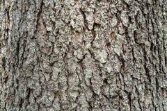 Cedar wood bark. stock photos