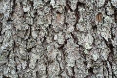 Cedar wood bark. stock photography