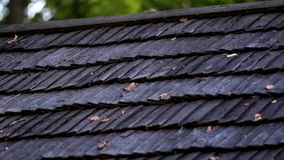Cedar wooden roof shingles and tall trees on the background. Wooden roof shingles and tall trees on the background as the wind blows the leaves on the branch and stock video