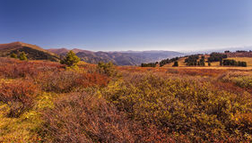 Cedars and birches in Altai valley in autumn Stock Photography