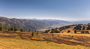 Cedars and birches in Altai valley in autumn Royalty Free Stock Photo