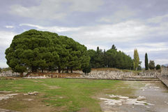 The Cedars. On the ruins of ancient Greek city Ephesus Royalty Free Stock Photos