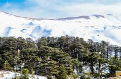 The Cedars in Lebanon in the winter of 2018. The Cedars and ski resort in Lebanon in the winter of 2018 royalty free stock photos