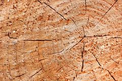 Cedarwood texture on the Taiwan Royalty Free Stock Image