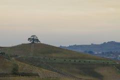 Cederboom van Libanon Een seculaire boom, symbool van La Morra Royalty-vrije Stock Foto's