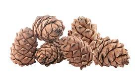 Cederkegels met noten Geïsoleerde Royalty-vrije Stock Afbeeldingen