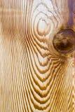 cederträkornträ Royaltyfria Bilder