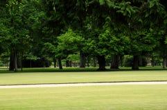 cederträpark Fotografering för Bildbyråer