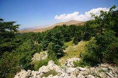 Cederträreserv, Tannourine, Libanon Arkivfoto