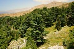 Cederträreserv, Tannourine, Libanon Royaltyfri Fotografi