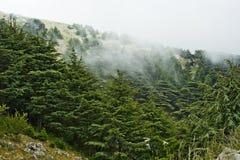 Cederträskog i Libanon Royaltyfria Bilder