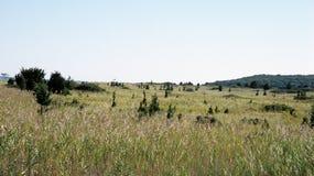 Cederträträd Arkivfoto