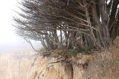 Cederträträd klamra sig fast intill ojämna klippor på Davenport, Kalifornien Fotografering för Bildbyråer