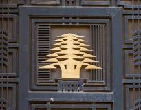 Cederträträd, symbol av Libanon royaltyfri fotografi