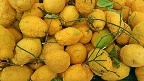 Cedrat owoc, cytrusa medica są naukowym imieniem z liśćmi i gałąź, fotografia royalty free