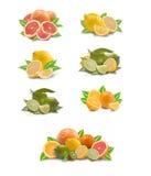 cedrata kolekci owoc Fotografia Stock