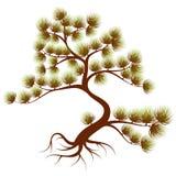 Cedro dell'albero illustrazione di stock