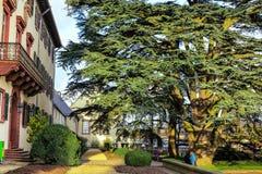 Cedro di 200 anni (cedrus libani) nel giardino cattivo Homburg, Germania del palazzo Immagine Stock Libera da Diritti