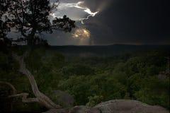 Cedro y puesta del sol después de la ducha Imágenes de archivo libres de regalías
