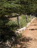Cedros de Líbano foto de archivo