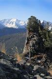 Cedros en rocas. Foto de archivo libre de regalías