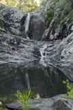 Cedrowa zatoczka Spada w górze Tamborine Obraz Royalty Free