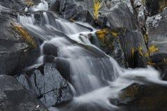Cedrowa zatoczka Spada w górze Tamborine Zdjęcie Royalty Free