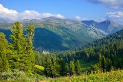 cedrowe lasu krajobrazu góry Zdjęcia Royalty Free