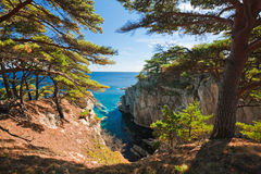 cedrowy morze Fotografia Royalty Free