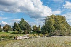 Cedrowy Rzeczny śladu park 3 Obrazy Royalty Free
