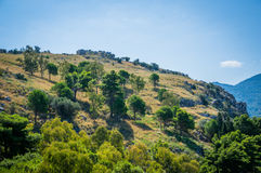 Cefalu与树的小山视图 免版税库存图片