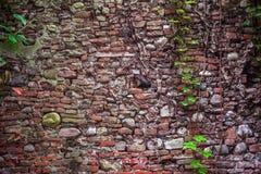 Cegły ściana Obraz Stock