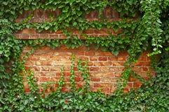 Cegły ogrodzenia zieleń Obrazy Stock
