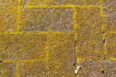 Cegły z zielonym mech w wark sposobie Zdjęcia Stock
