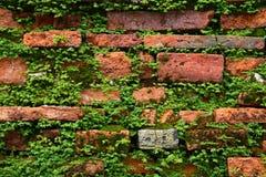 ceglana paprociowa stara ściana Zdjęcia Stock